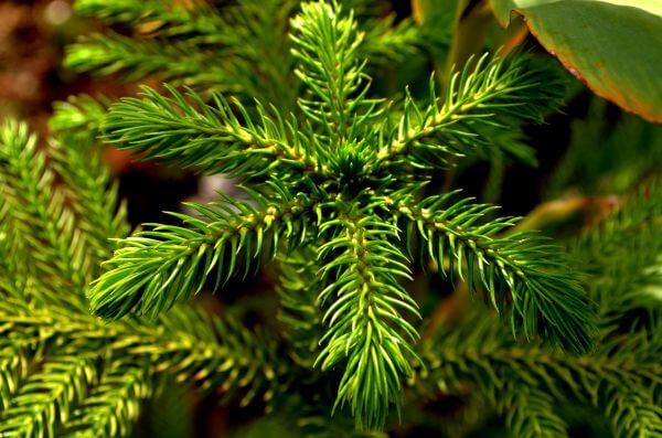 Leaves Ferns photo