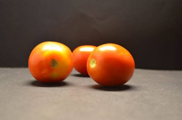 Tomatoes Vegetables photo