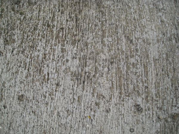 Concrete Texture Grunge photo