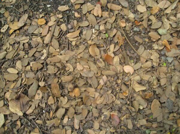 Dead Leaves Trash Ground photo