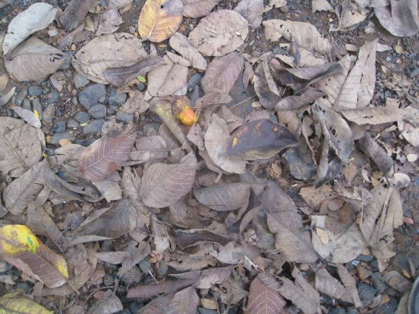 Dirty Leaves Trash Ground photo