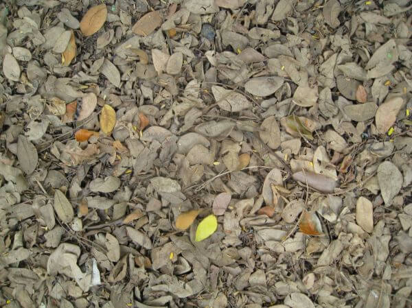 Leaves On Ground Rubbish photo