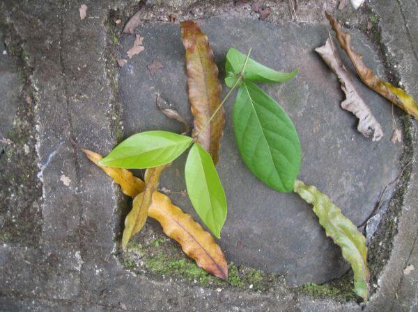 Leaves On Ground photo
