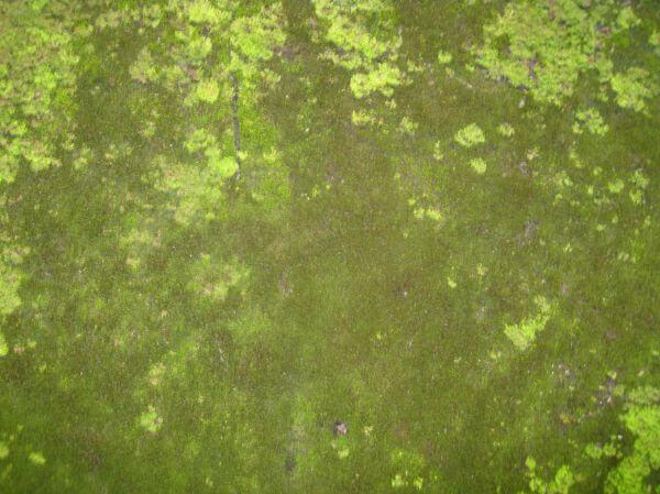 Moss Texture Green photo