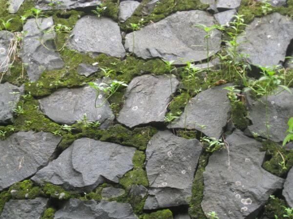 Stone Wall Moss Texture photo