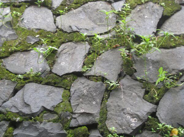 Stone Wall Texture Moss photo