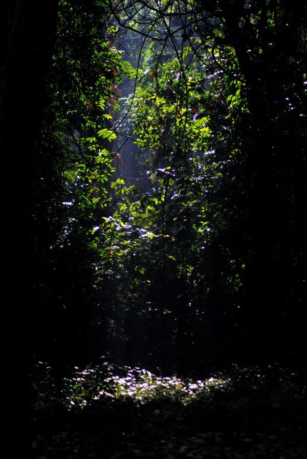 Gorumara Forest Jungle Trees Leaves photo