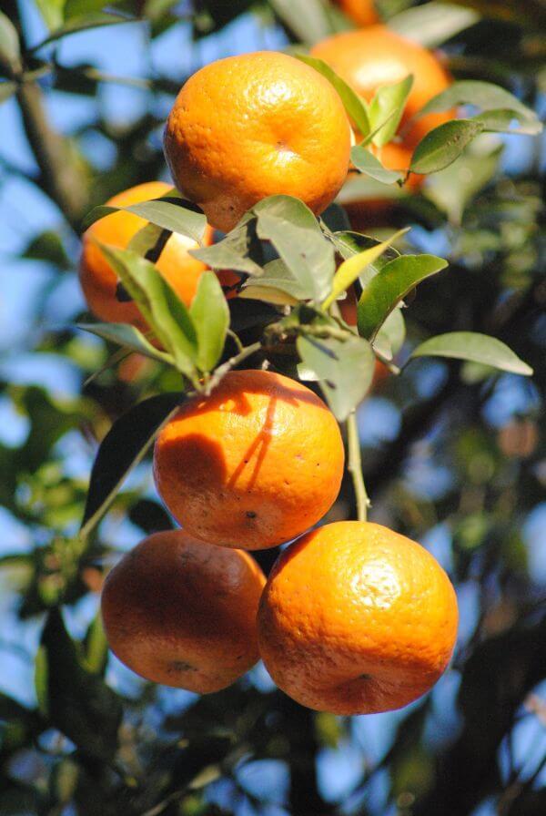 Orange Plant Bunch photo