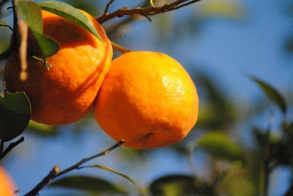 Orange Plant photo