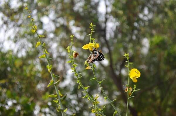 Blue Tiger Butterfly Garden photo