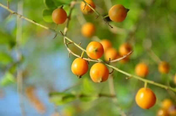 Fruit Orange Plant photo