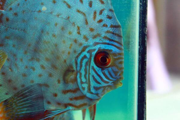 Aquarium Fish Tank photo