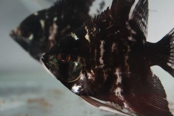 Black Fish Aquarium photo