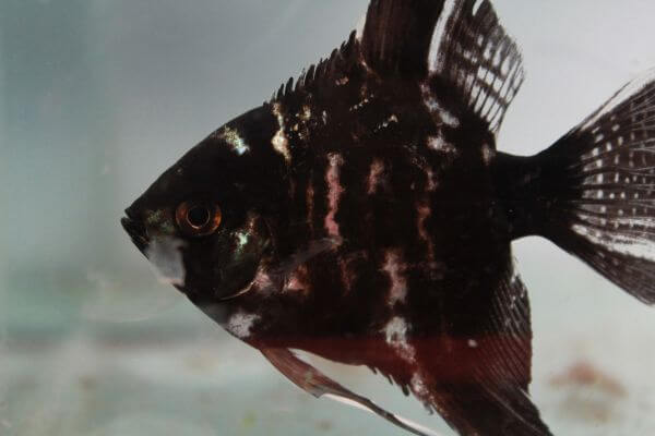 Black Fish Tank photo
