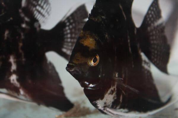 Black Fish photo