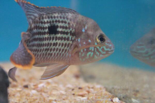 Brownish Fish 2 photo