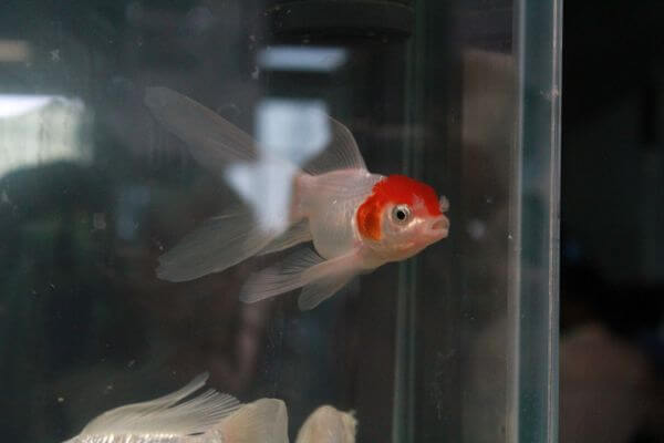Fish In A Glass Tank photo
