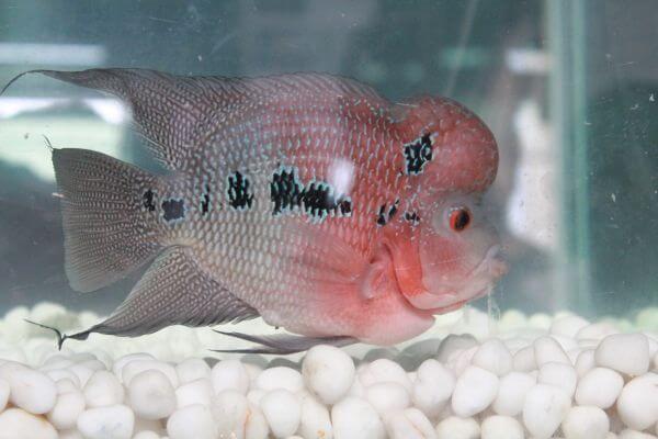 Fish White Stones photo