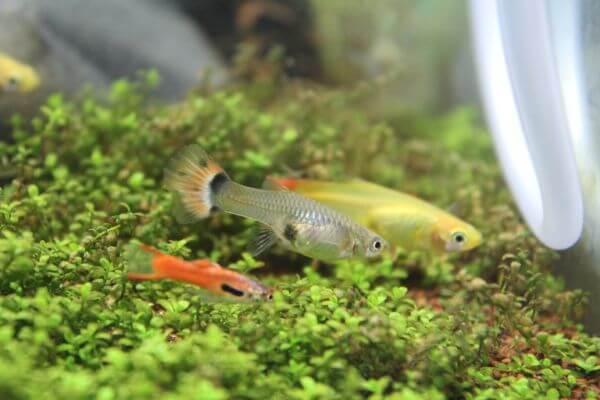 Small Fishes Aquarium photo