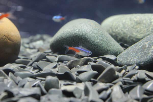Tiny Fish Cute photo