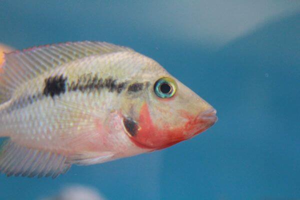 White Fish photo