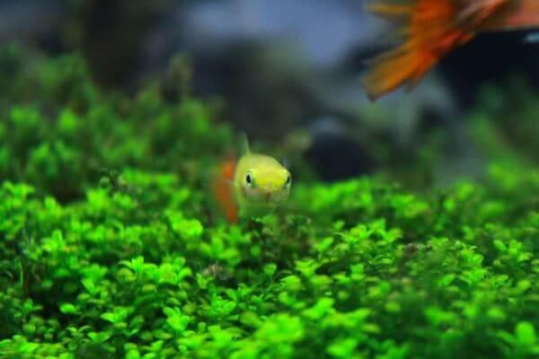 Yellow Fish photo