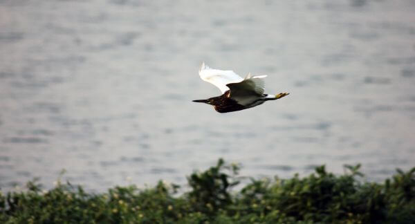 Bird In Flight Motion photo