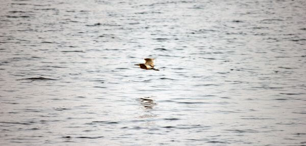 Bird In Motion 2 photo