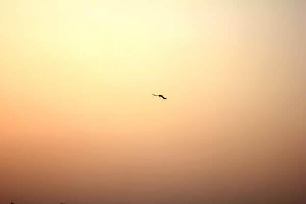 Bird Sunset photo