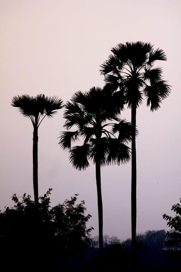 Decorative Trees photo