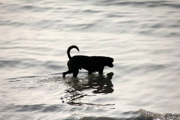Dog In Water photo