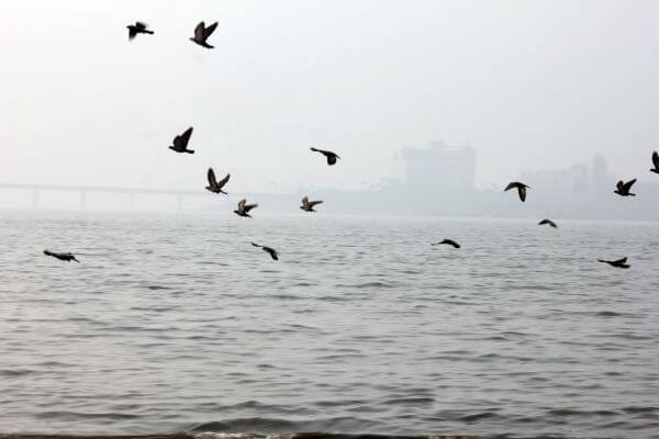 Pigeons Sea photo