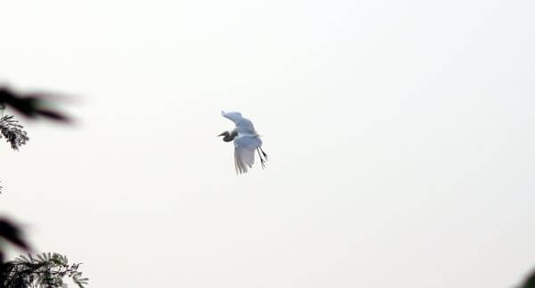 Stork White Bird Flying photo