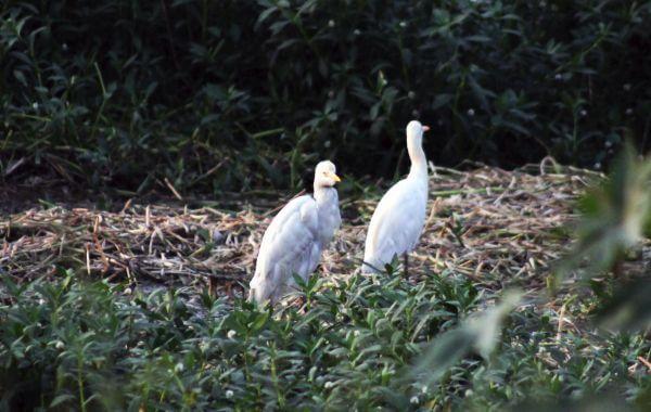 Two White Birds photo