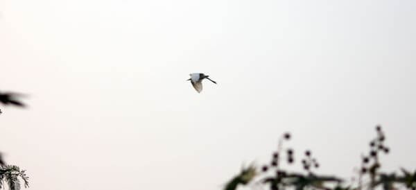 White Bird Flying photo
