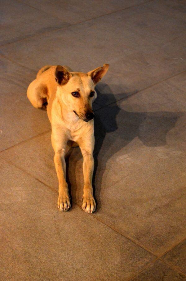 Dog Sitting 2 photo