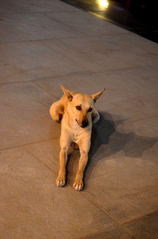 Dog Sitting photo