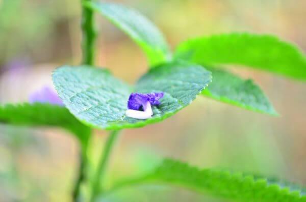 Leaf Closeup photo