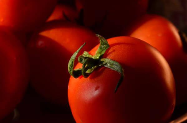 Tomato Pile photo
