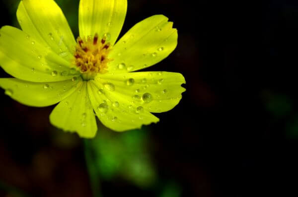 Yellow Flower 2 photo