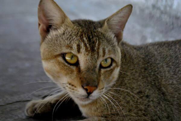 Cat 3 photo