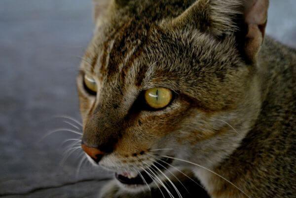 Cat Face photo