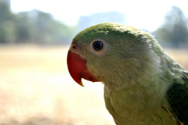 Green Parrot 2 photo