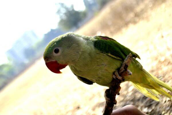 Green Parrot Branch photo