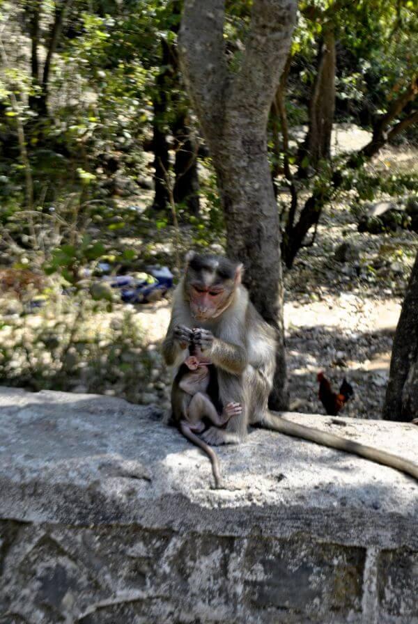 Monkey Mother Child photo