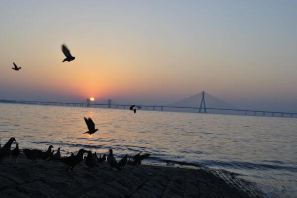 Mumbai Birds Sunset photo