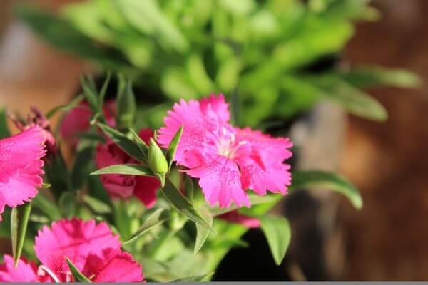 Beautiful Pink Flower Garden photo
