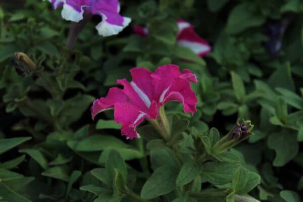 Bright Flower In Garden photo