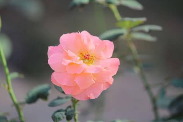 Bright Pink Flower photo