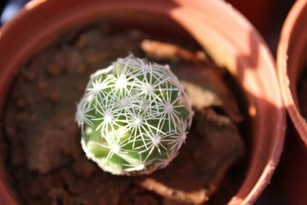 Cacti Plant Pot photo